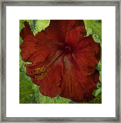 Hibiscus Plus Fern Framed Print