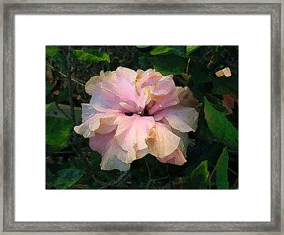 Hibiscus Radiant Framed Print by Katharine Birkett