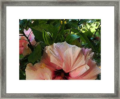 Hibiscus Seclusion Framed Print by Katharine Birkett