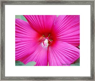 Hibiscus Framed Print by Sharon Mason