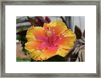 Hibiscus Yellow Framed Print