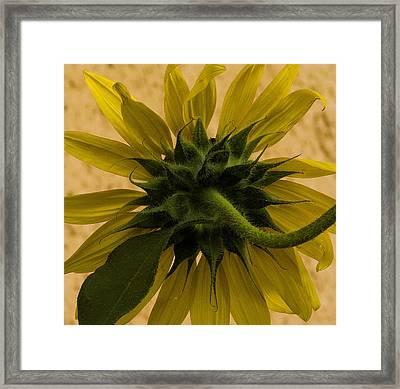 Framed Print featuring the photograph Hidden Beauty by Michael Friedman