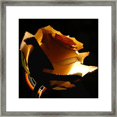 Hidden Beauty  Framed Print
