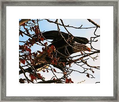 Hidden Framed Print by Carrie OBrien Sibley
