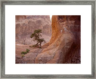 Hidden Curves Of Arches Framed Print by Ramie Liddle