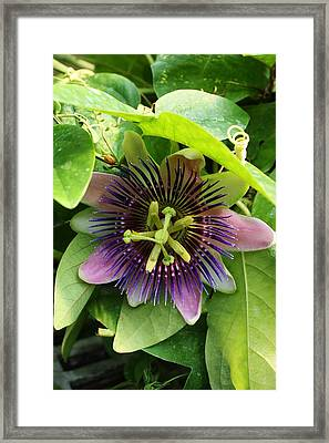 Hidden In The Leaves Framed Print by Bruce Bley