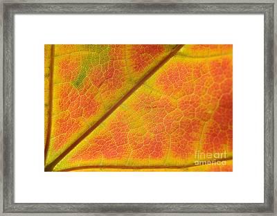 Hidden Mosaic Framed Print by Luke Moore