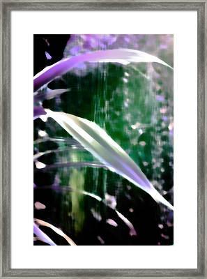 Hidden Paradise Framed Print by Miss Dawn