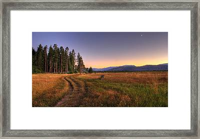Hidden Path Framed Print by Brad Scott