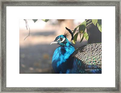 Hidding In The Shadows Framed Print by Rebbeca Alt