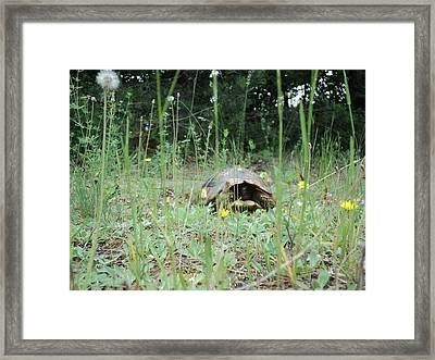 Hide And Seek Framed Print by Saska V
