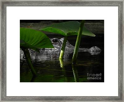 Hide And Seek You Framed Print by Jack Norton