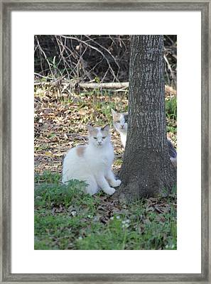 Framed Print featuring the photograph Hide 'n Seek by Rdr Creative