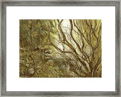 Hideaway Plants In Brown Yellow And Green Branches Leaves Trunks Stones Framed Print by Rachel Hershkovitz