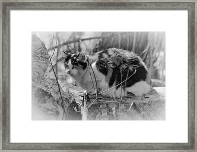 Framed Print featuring the photograph Hiding by Eunice Gibb