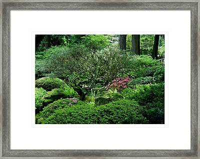Framed Print featuring the photograph Hiding In A Sea Of Green by Frank Wickham