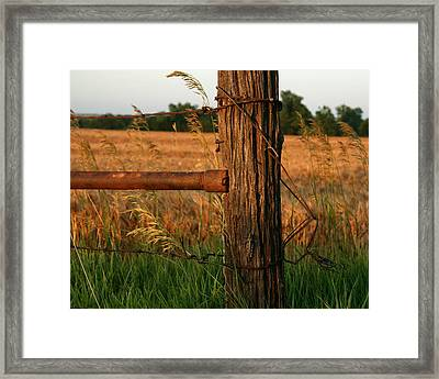 Hiding In Plain Sight Framed Print by Andrew Dyer Photography