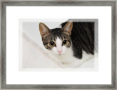 Hiding In The Bath Tub Framed Print by Andee Design
