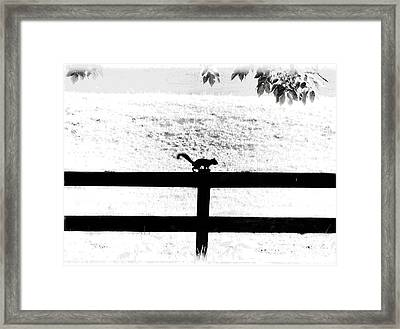 Hiding In The Shadows Framed Print by Cris Hayes
