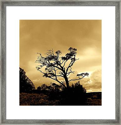 High Country Tree Framed Print by FeVa  Fotos