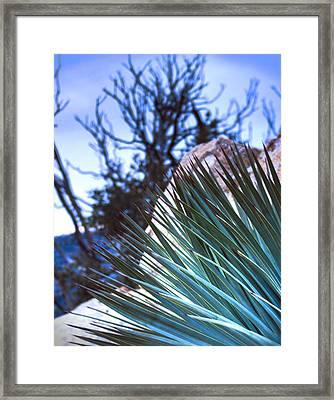 High Desert Cactus Framed Print by Jeffery Reynolds