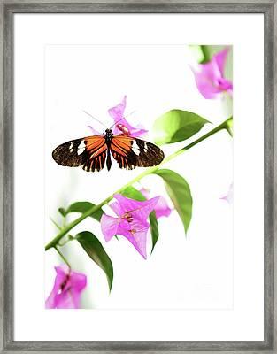 High Key Piano Key Butterfly Framed Print by Sabrina L Ryan