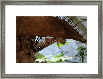 High Notes  Framed Print by Sean Green
