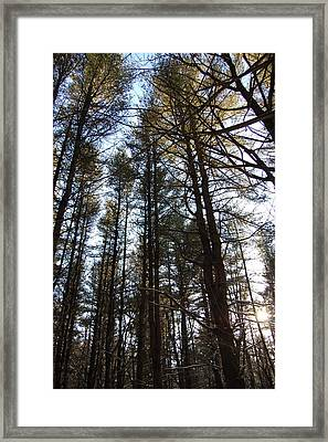 High Pine Forest Framed Print by Jesse Phillips
