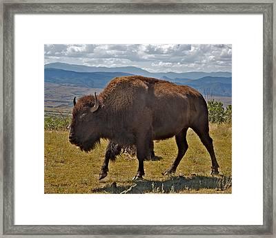 High Plains Buffalo Framed Print by Stephen  Johnson