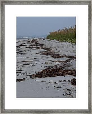 High Tide Litter Framed Print by Frank Wickham