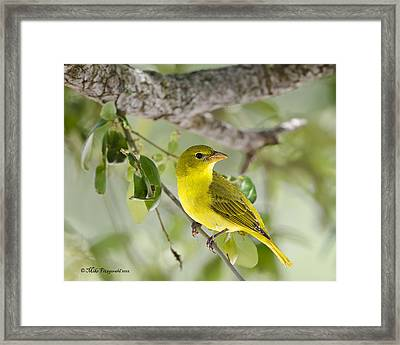 Highlighter Yellow Framed Print