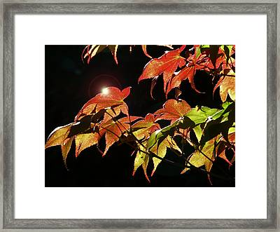 Highlighting The Season Of Fall 2 Framed Print by Cindy Wright