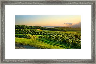 Hill-top Vineyard Framed Print by Steven Ainsworth