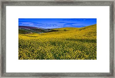 Hills Of Canola Framed Print
