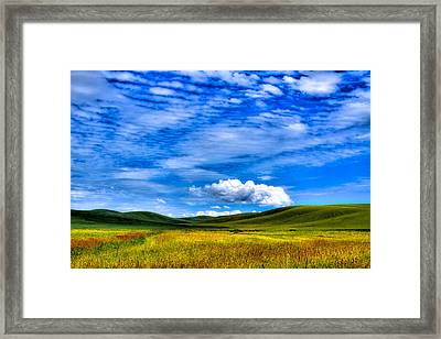 Hills Of Wheat In The Palouse Framed Print by David Patterson