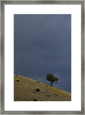 Framed Print featuring the photograph Hillside Tree by J L Woody Wooden