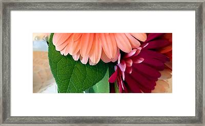 Framed Print featuring the photograph Hint Of Daisies by Lynnette Johns