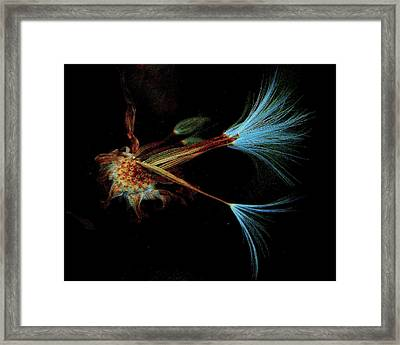 His Realm.. Framed Print by Al  Swasey