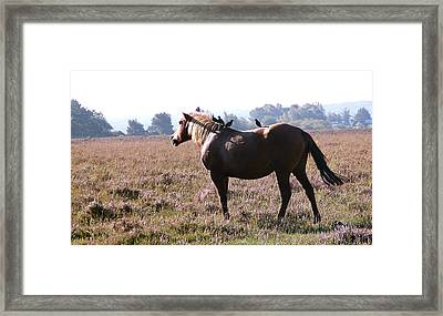 Hitching A Ride Framed Print by Karen Grist