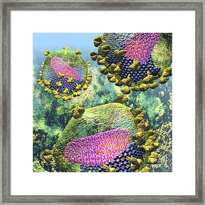 Hiv Three Sectioned Virions On Blue Framed Print
