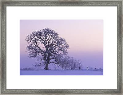 Hoar Frost On Tree, Ebenezer, Prince Framed Print