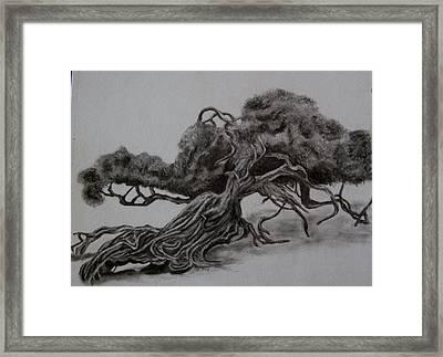 Hobbit Tree Framed Print by Joan Pye
