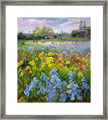 Hoeing Team And Iris Fields Framed Print by Timothy Easton