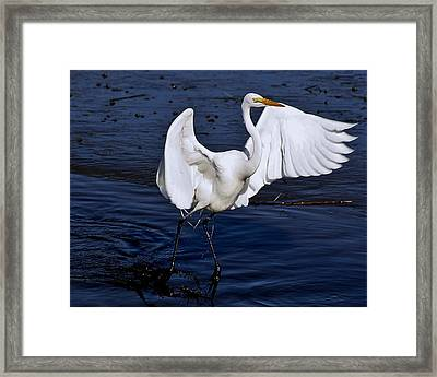 Hold On I'm Coming Framed Print by Paulette Thomas