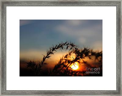 Hold On To The Sun Framed Print by Erica Hanel