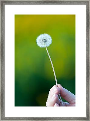Holding On To The Last Days Of Summer Framed Print