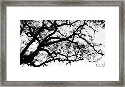 Holding The Sky Framed Print by Vera Rodrigues
