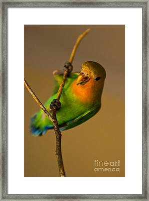 Holding Tight Framed Print by Syed Aqueel