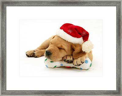 Holiday Lab Framed Print by Jane Burton