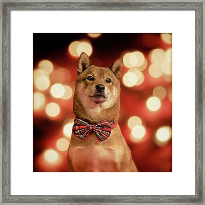 Holiday Outfit Framed Print by DancingShiba